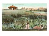 Lily Pond  Branch Brook Park  New Jersey