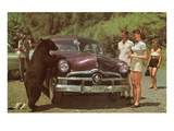 Tourists Watching Black Bear