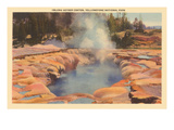 Oblong Geyser  Yellowstone Park  Montana