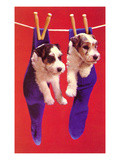 Terrier Puppies in Socks  Retro