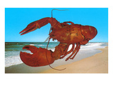 Giant Lobster on Beach