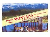 Greetings from Montana  Treasure State