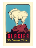 Rocky Mountain Goat  Glacier National Park  Montana