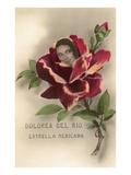 Dolores Del Rio  Mexican Star