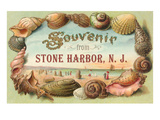 Souvenir from Stone Harbor  New Jersey