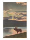Moose at Sunset  Montana