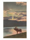 Moose at Sunset  Montana