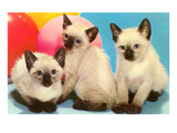 Three Siamese Kittens