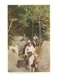Bretton Woods Rangers  New Hampshire