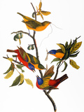 Audubon: Bunting  1827