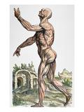 Vesalius: Muscles 02  1543