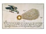 Comet  1664