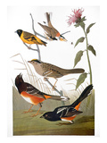 Audubon: Various Birds