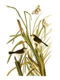 Audubon: Sparrow  1827