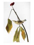 Audubon: Thrush  1827