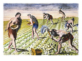 Florida Native Americans:Tilling 1591