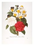 Redoute: Bouquet  1833