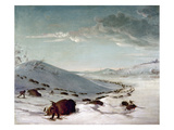 Buffalo Chase In Winter