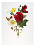 Redoute: Hellebore  1833