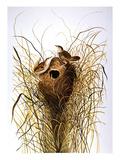 Audubon: Wren