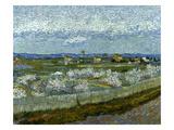 Van Gogh: Peach Tree  1889