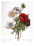 Redoute: Anemone  1833