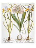 Leek And Irises  1613