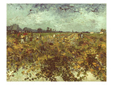 Van Gogh: Vineyard  1888