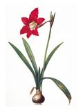 Botany: Lily