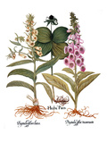 Foxglove And Herb Paris