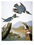 Audubon: Kingfisher  1827
