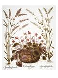 Cyclamen & Lavender  1613