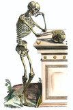 Vesalius: Skeleton  1543