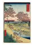 Japan: Maple Trees  1858