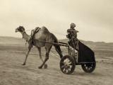 Syria: Camel Race  C1938