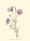Delicate Wildflowers VI