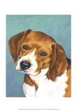 Dog Portrait  Beagle