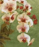 Island Orchid II