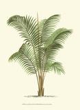 Coastal Palm II