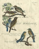 Vintage Ornithology I