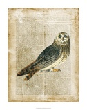 Antiquarian Birds I