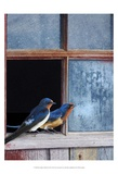 Barn Swallows Window