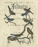 Vintage Ornithology II