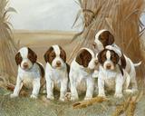 Belle's Pups