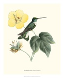 Hummingbird and Bloom I