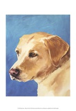 Dog Portrait  Yellow Lab