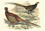 Pheasant Varieties V