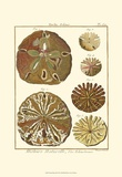 Sand Dollars III