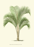 Coastal Palm I