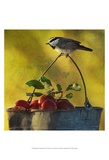 Apples and Chickadee